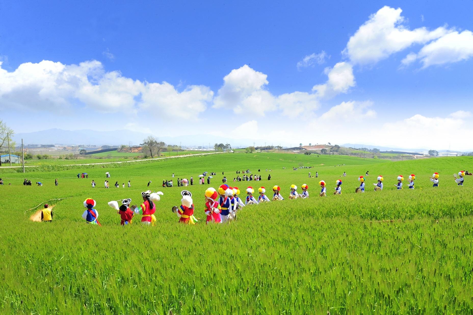 고창 청보리밭축제(4월, 5월)